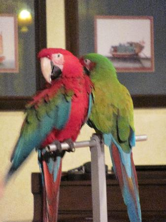 Dom Pedro Madeira: Evening Parrot show in the Piano Bar