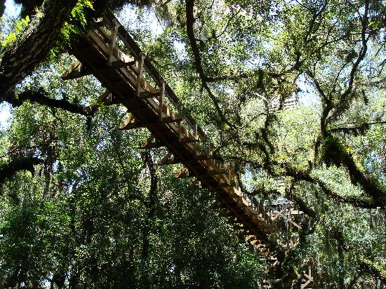 Myakka Canopy Walkway & Myakka Canopy Walkway (Sarasota) - All You Need to Know Before You ...