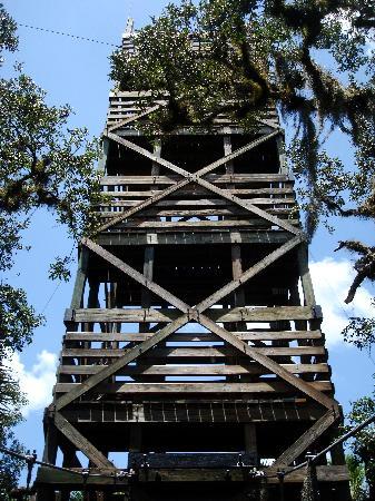 Myakka Canopy Walkway: Lookout tower