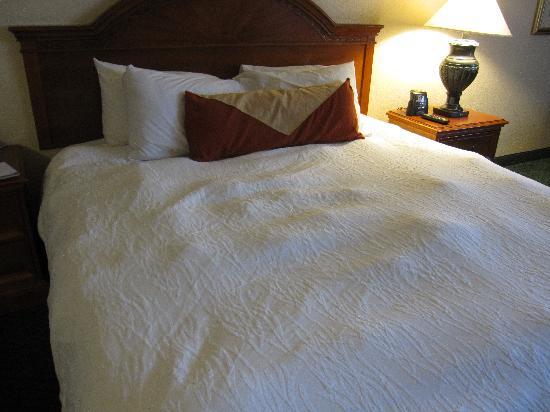 Hilton Garden Inn Dallas / Market Center: Lumpy bed