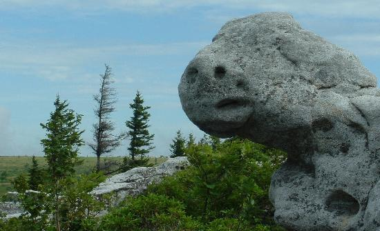 Dolly Sods Wilderness Area : Weathered rock on the Dolly Sods plateau