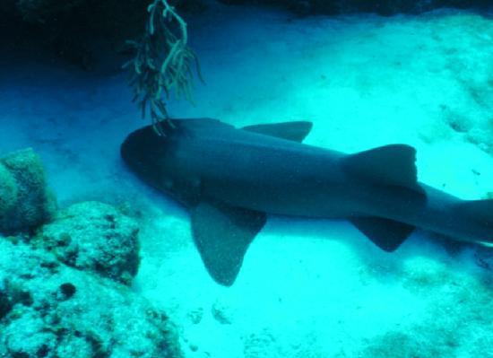 Cozumel Shark Picture Of Living Underwater Cozumel Tripadvisor