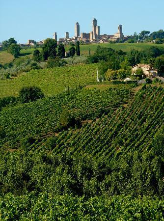 Agriturismo Il Vecchio Maneggio: View of the towers of San Gimignano from Il Vecchio Maneggio.