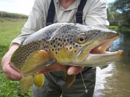 Fly Fish Mataura