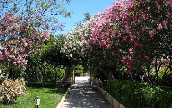 Hotel Phoenicia: Garden leading to the pool