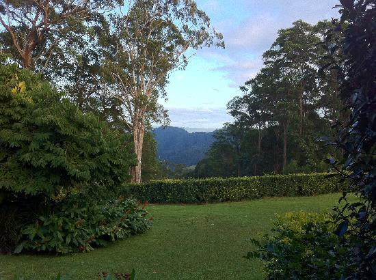 Mapleton Falls Accommodation: Garden view