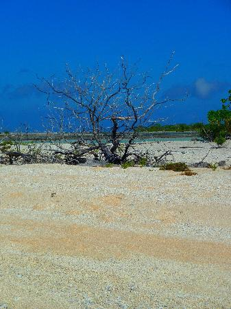 Pension Hotu: A la découverte des motu de sable rose.