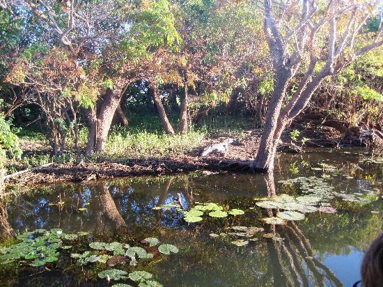 Kakadu National Park, Australie : spot the croc