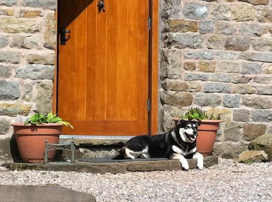 Ford, UK: Penny relaxing on the doorstep