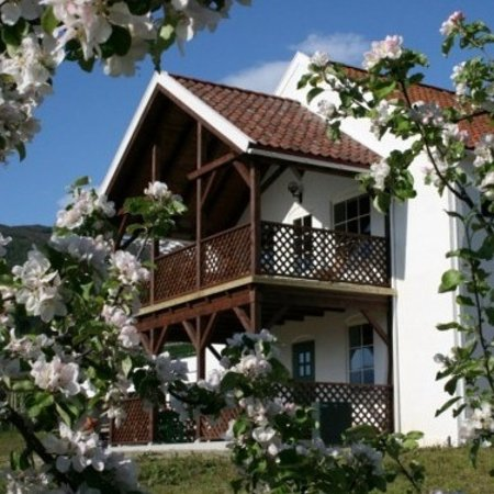 The Cider House: The Ciderhouse in the spring blossom