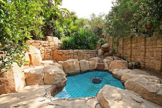 Ikhaya Guest House: Swimming Pool and Bush