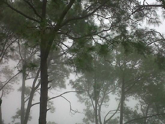 Haryana, Inde : Mist in the air