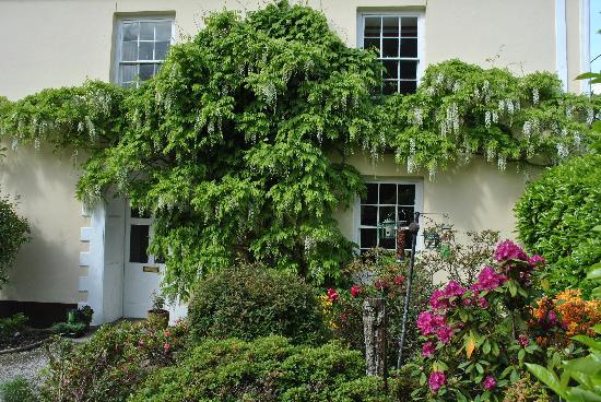 Elmfield: The wisteria in flower at the front door