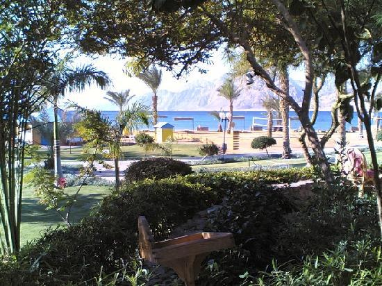 Tirana Dahab Resort: view from breakfast table