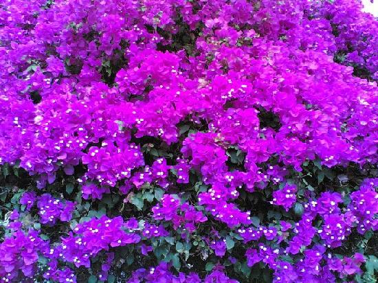 Tirana Dahab Resort: coralia garden tree flowers