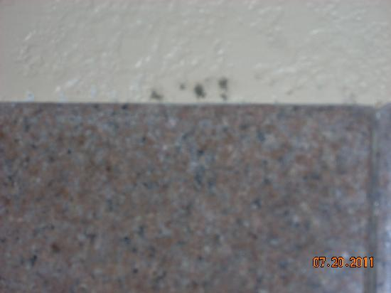 Travelodge Galveston: mold on shower wall