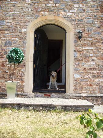 Harold's House B&B: Harold our dog