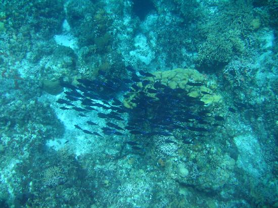 And baracudas picture of mystic snorkel cozumel for Go fish mystic