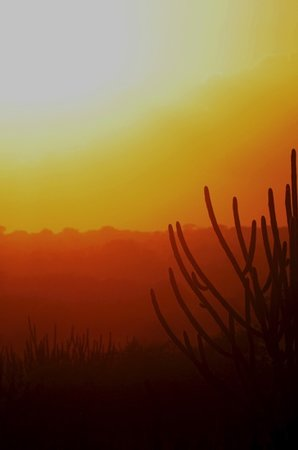 State of Rio Grande do Norte: Cactus by Francisco Diniz