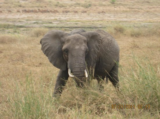 Tarangire National Park, แทนซาเนีย: plenty of chances to be trumpeted at