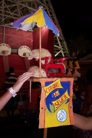 Family Kingdom Amusement Park: Trained rats on display