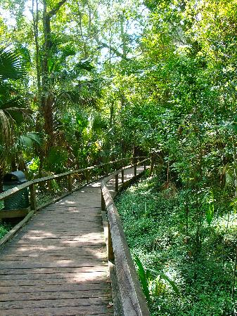 Apopka, FL: Boardwalk to springs
