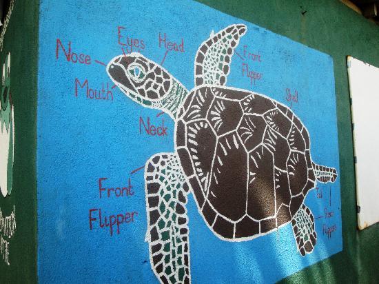 The Turtle Diagram Photo De Kosgoda Sea Turtle Conservation