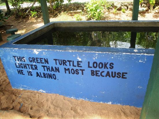 The Turtle Diagram Picture Of Kosgoda Sea Turtle Conservation