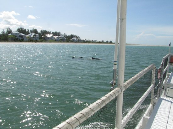 Lemon Bay Tours: Dolphins