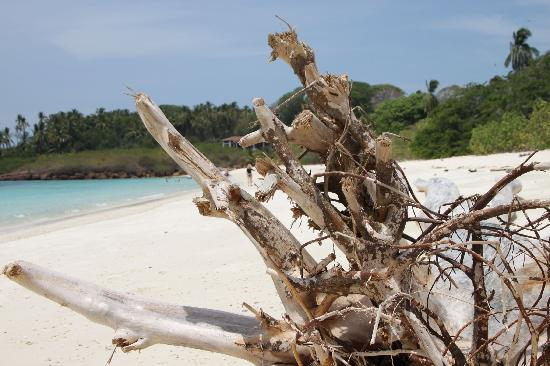 Ocean Lofts: Isla Iguana