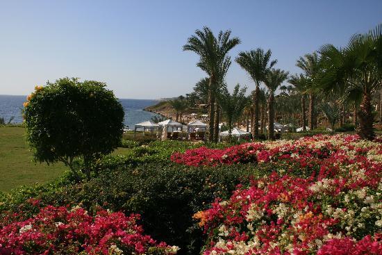 Four Seasons Resort Sharm El Sheikh: jardins
