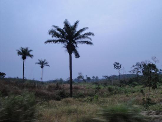 Sierra Leone: Jaiama Nimikoro , Kono