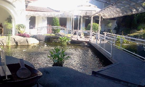 Hotel Merdeka : fish pond