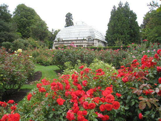 Christchurch Botanic Gardens: Rose garden