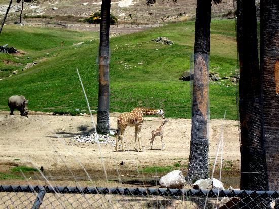 Safari park escondido coupons
