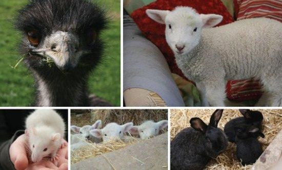 Lindale Farm & Barn: Farm Fun for Everyone