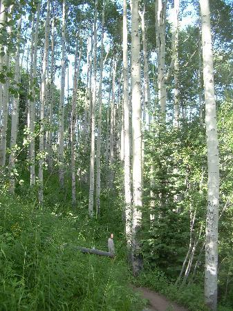 Cathedral Lake Trail: Aspens