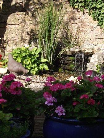 Draycott, UK: garden 1
