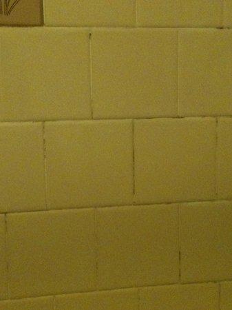 Eagle River Motel: mold between tiles