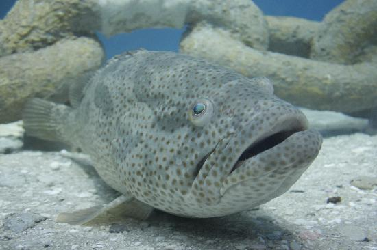 Sharjah Aquarium: SHARJAH AQUA