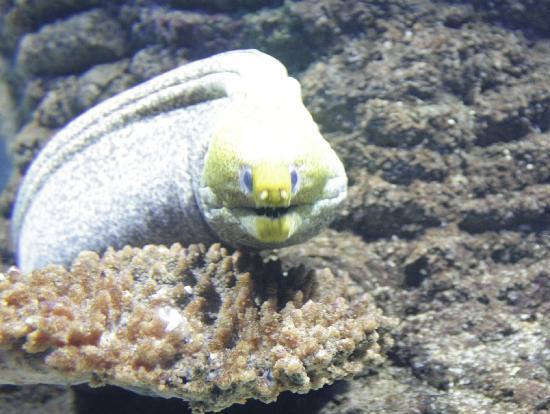 Sharjah Aquarium: SHAJ AQUA2