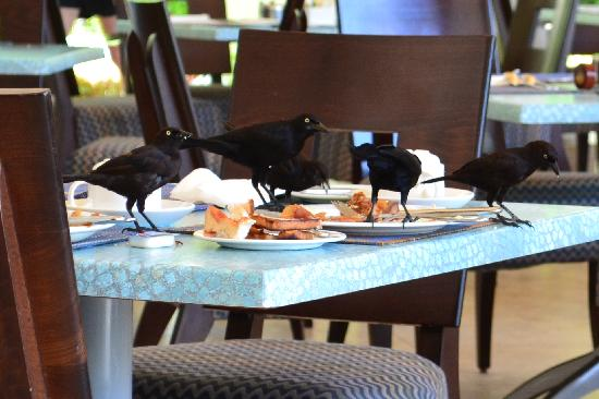 Turtle Beach by Elegant Hotels: Birds at breakfast