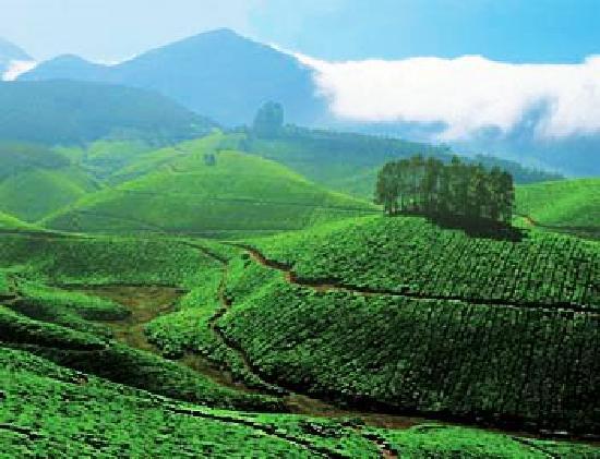 Carnival Tours & Travels: Munnar Tour Packages Kerala