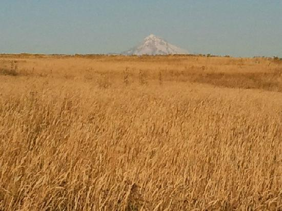 Powell Butte Nature Park: Golden grasses in August