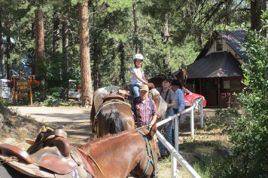 Elk Point Lodge & Cabins: getting ready to ride
