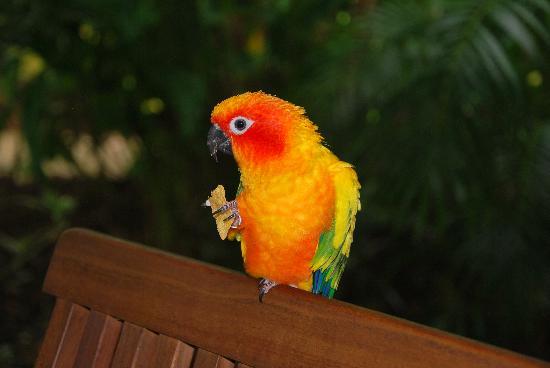 Boutique Bungalows: Mango