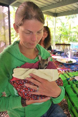Boutique Bungalows: Meet a joey at breakfast