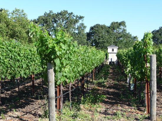 Vineyards of Chateau de Vie