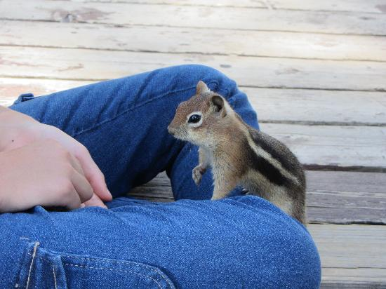 Elk Point Lodge & Cabins: Feeding chipmunks