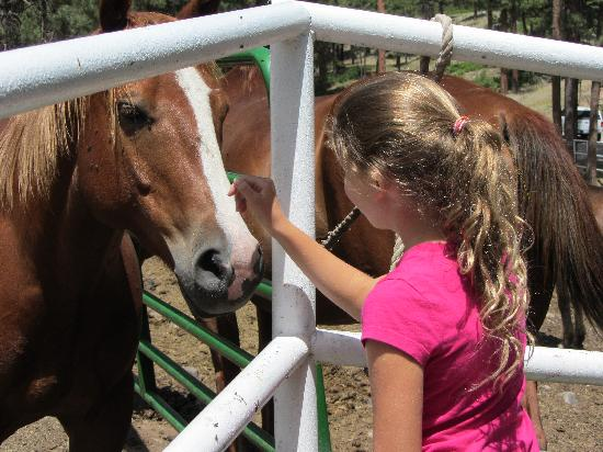 Elk Point Lodge & Cabins: Petting the horses